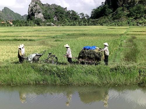 agriculteurs vietnamiens