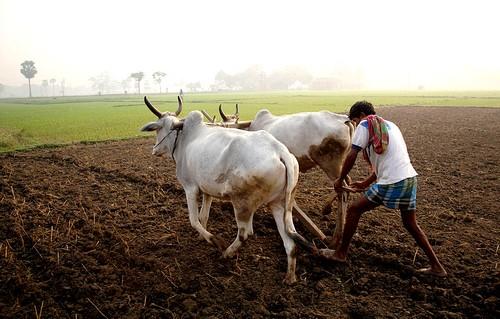 agriculteur en Inde