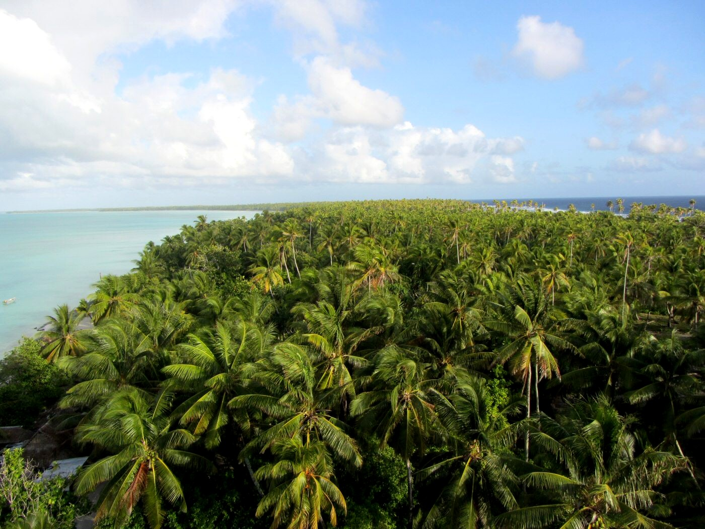 Jungle de Kiribati
