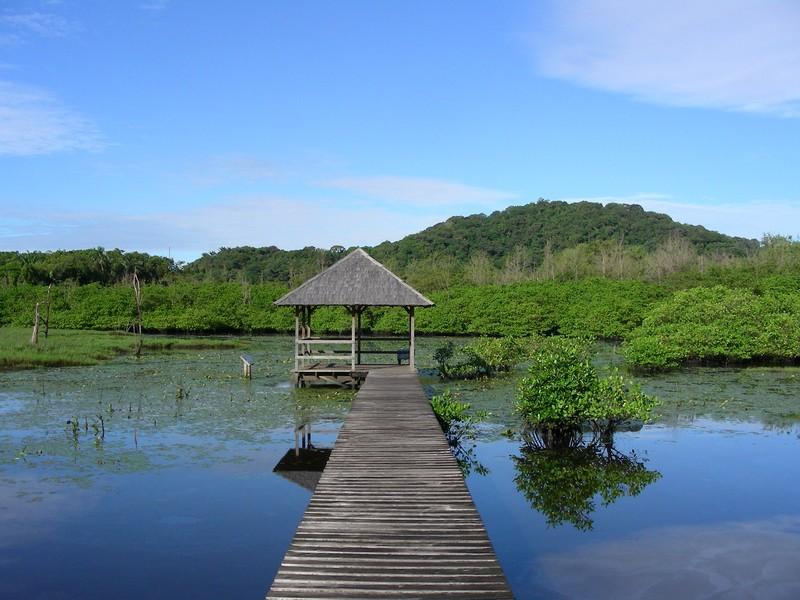 Forêt de la Guyane Francaise