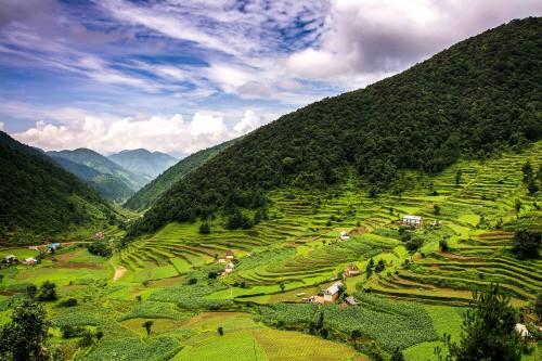 Champs d'agriculture au Népal